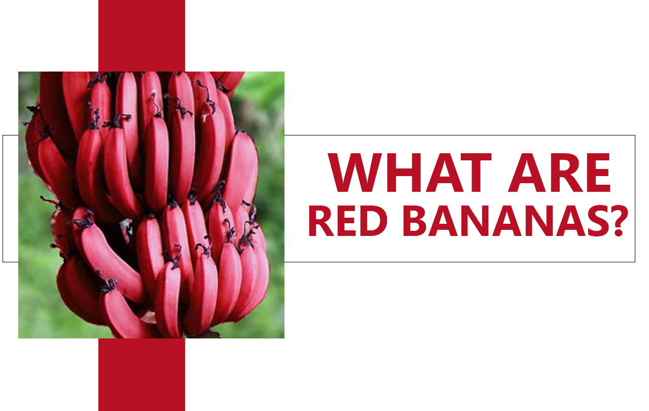 Red Bananas Plant